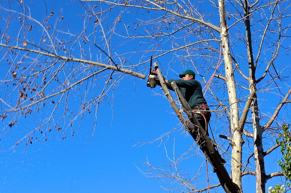 4 Reasons To Have Your Trees Pruned