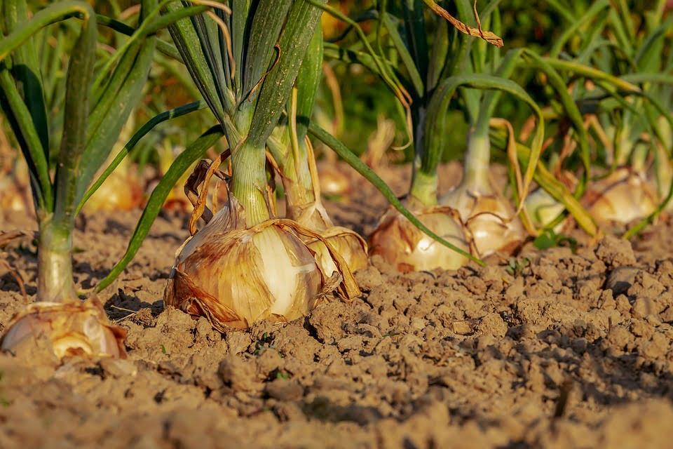 good soil to plant vegetables