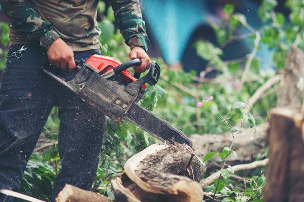 Lumberjacks and woodworkers