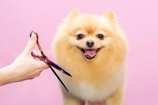 dog grooming errors