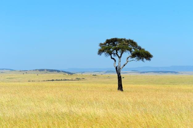 Visit the Serengeti National Park