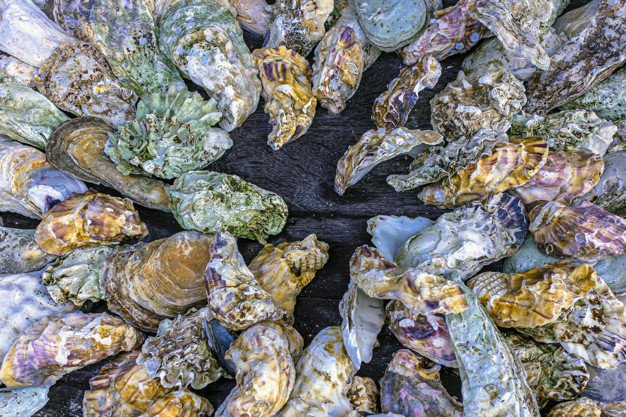 5. People have been cultivating and eating oysters for millennia: