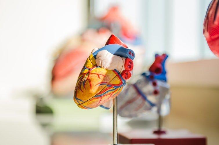 2. Heart Diseases-
