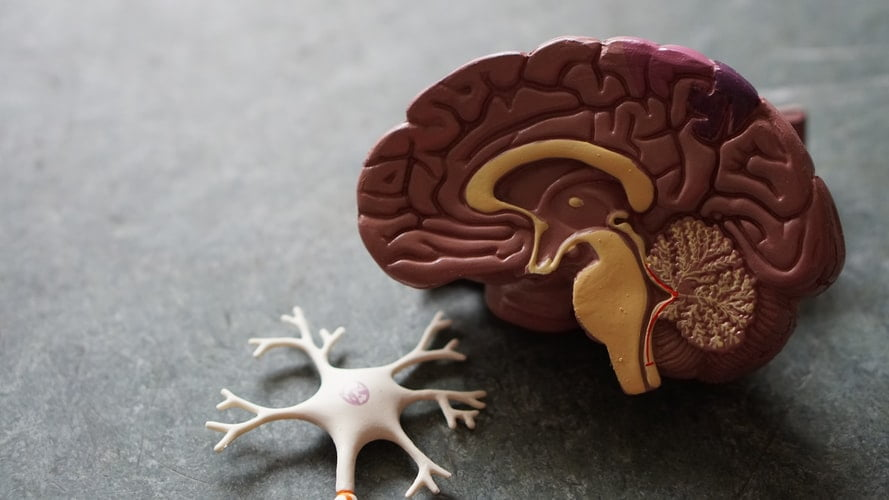 2. Increased Neuroplasticity