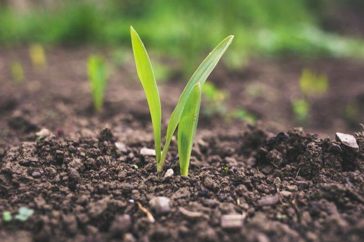 1. Soil Testing