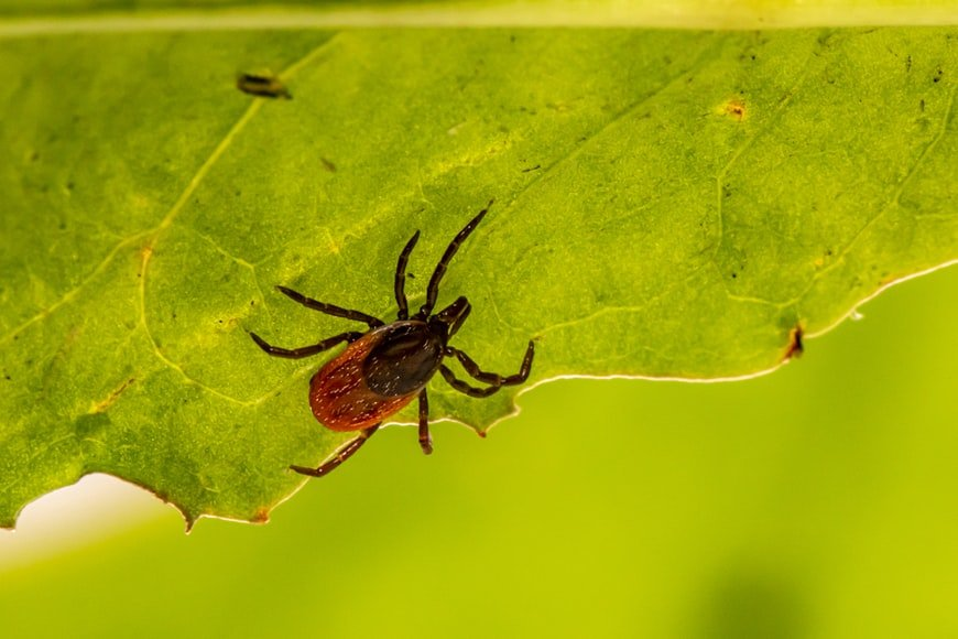 Misconception About Ticks and Winter
